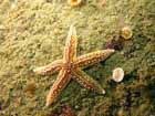 common_starfish_cup_coral.jpg
